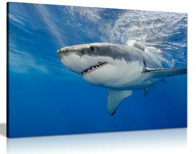 Shark Underwater Blue Canvas Wall Art Picture Print