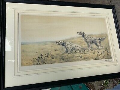 English Setter print signed. Excellent quality