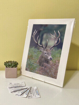 Art Print Image Picture Photo Photography - Red Deer Stag | Nature | Wildlife