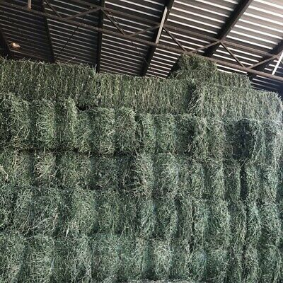 Lucerne Small Square Bales