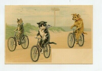 Helena Maguire Non Signed. Cats Humanized Bike
