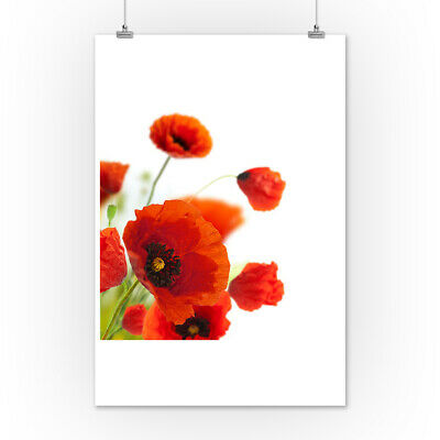 Floral Design Red Poppies Photography A-93729 (Art Posters, Wood & Metal Signs)