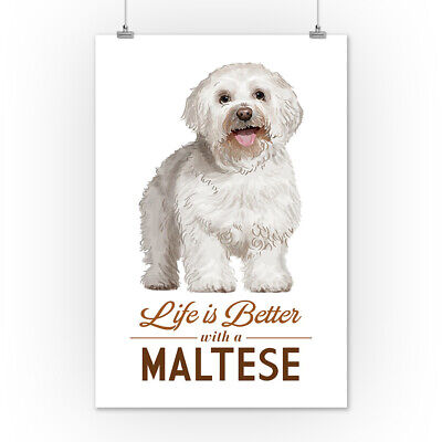 Maltese - Life is Better - White Background (Art Posters, Wood & Metal Signs)