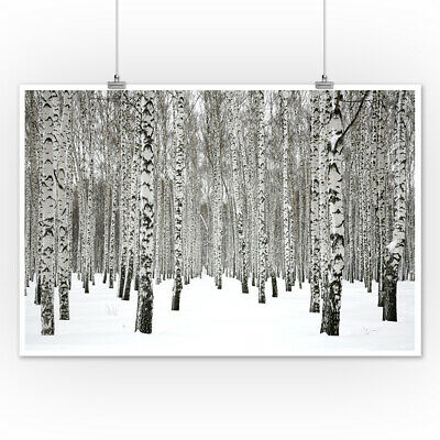 """36W/""""x18H/"""" SILVER LINING by TANDI VENTER WHITE GRAY BARK BIRCH FOREST CANVAS"""