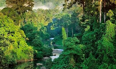 Guided Meditation To Visit An Ancient City In A Rainforest Cd, Nature Sounds