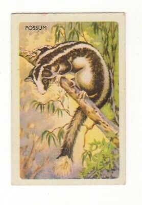 Australian Animal Trade card - Possum