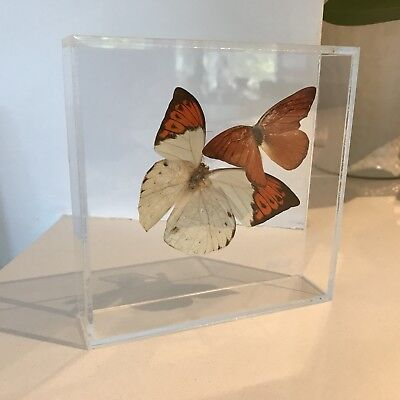 Butterflies In Clear Lucite Shadow Box