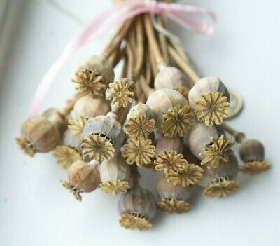 25 English Dried Flower Seed Heads Design Crafts from Sussex garden this summer