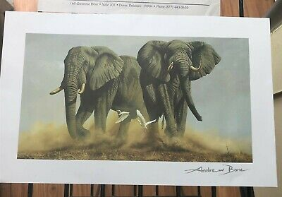 """Cheetah Andrew Bone /"""" Silent Stalkerr/"""" with COA seriolithograph"""
