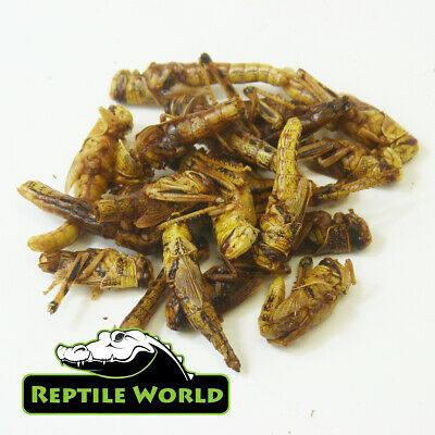 Reptile World Dried Locusts / Grasshoppers - UK Grown & Dried - Turtle Food
