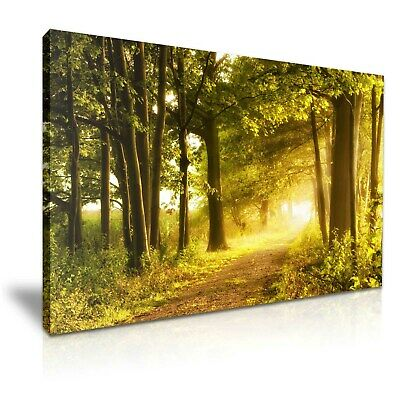 Misty Forest Sunlight Stretched Canvas 76x50cm / 30X20 Inch