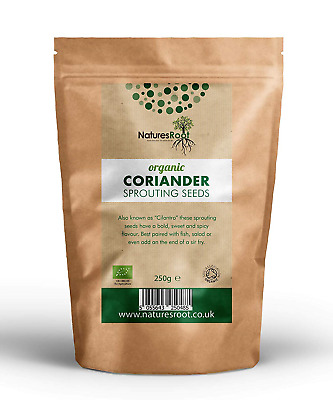 Natures Root Organic Coriander Sprouting Seeds 500g - Cilantro Sprouts | Non GMO