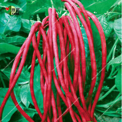Bean Chinese Vegetable Seeds Plants Diy Garden Bonsai Red Home 10pcs/bag