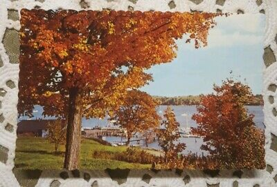 Vintage Unposted  Postcards ◇ Fall On The Maine Coast