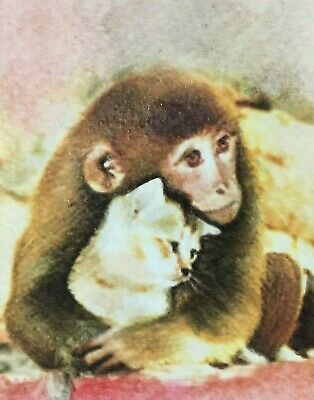 ACEO painting drawing kitten monkey art miniature picture watercolor original