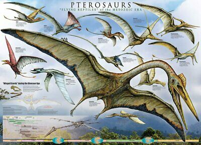 61cm x 91.5cm XS8702-619 FEATHERED DINOSAURS Maxi Poster