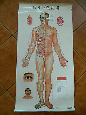 Vintage 1971 Reprint 2006 Large Acupuncture Points Chinese Charts Poster No1