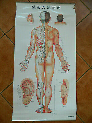 Vintage 1971 Reprint 2006 Large Acupuncture Points Chinese Charts Poster No2