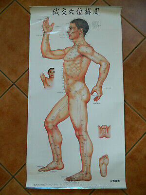 Vintage 1971 Reprint 2006 Large Acupuncture Points Chinese Charts Poster No3