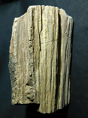 Perfect BARK! A HUGE! 225 Million Year Old Petrified Wood Fossil Utah 6811gr e