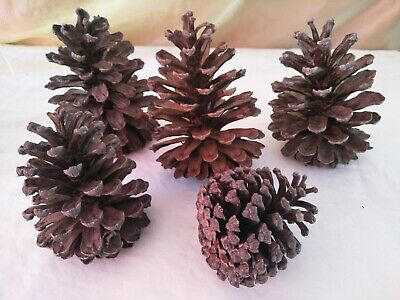 Pinecone Craft Christmas country