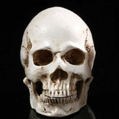 White Resin Simulation Replica Realistic Human Skull Gothic Halloween Decor N2C