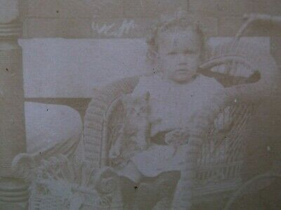 Cabinet Card Cute Toddler Aged Boy with Pet Kitten Curly Hair WIcker Stroller