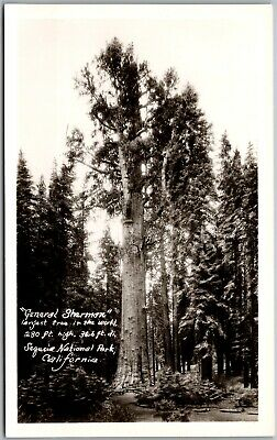 General Sherman Sequoia National Park CA Vintage RPPC Real Photo Postcard C4