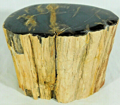 Perfect BARK! On This BIG Polished Petrified Wood Fossil From Utah! 3965gr e
