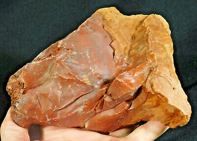 A BIG! Colorful 225 Million Year Old Petrified Wood Fossil From Arizona 1670gr e