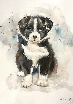 New Original Watercolour Painting 'Border Collie Puppy' Dog Wall Art