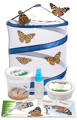 "LIVE Butterfly Kit-12"" Pop up Cage with FREE Certificate for 5 LIVE Caterpillars"