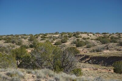 40 ACRES, $135/mo, NORTHERN AZ RANCH - 4 miles off US-191 - GOOD TREE COVERAGE