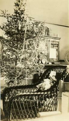 AT38 Vintage Photo VICTORIAN CHRISTMAS TREE, WICKER CHAIR c Early 1900's