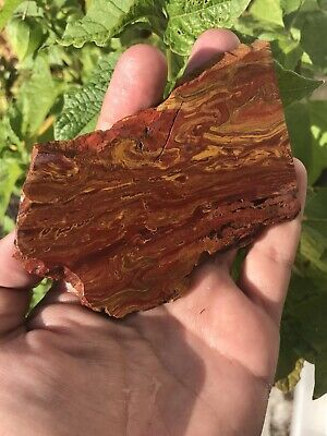 Spectacular Red And Yellow Oregon Jasper Slab. Cabbing Jewelry Lapidary Display