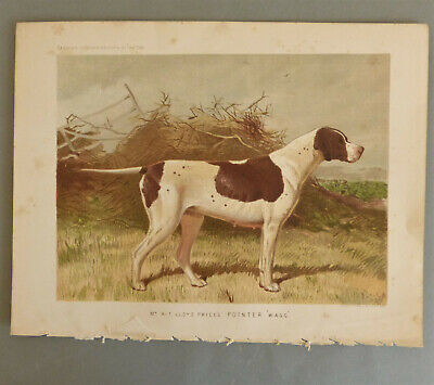 Pointer Dog Vero Shaw Antique Chromolithograph Print 1881