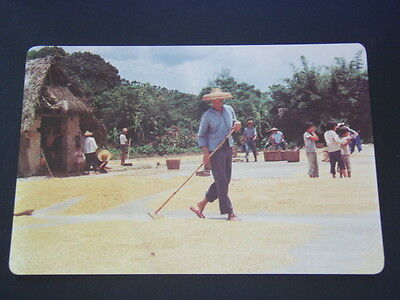 Drying Rice Crops People's Republic Of China Postcard