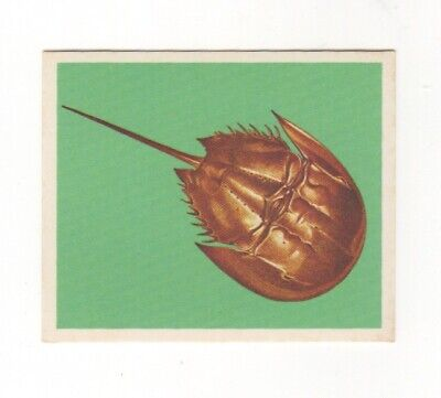 Nabisco Australia 1970 - Horseshoe Crab