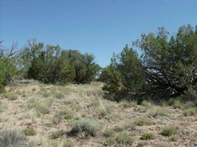 20 ACRES NORTH AZ RANCH LAND - WITCH WELL RANCH AREA, $110/mo. VERY WELL TREED!