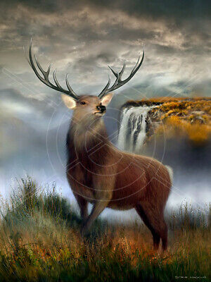 """Highland Stag Scotland Printed Box Canvas Picture A1.30/""""x20/"""" 30mm Deep Frame"""