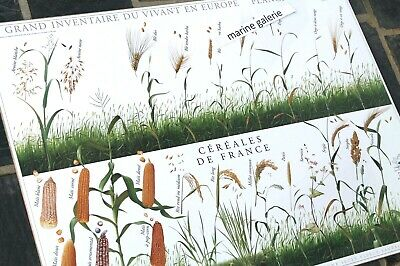 Poster décor agricultural France french food cereals céréales art drawing mint