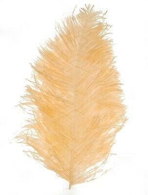 """IVORY for Hats//Bridal 2 PCs OSTRICH PLUMES 8/""""-18/"""" FEATHERS COLOR"""