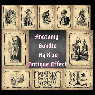 Medical Human Anatomy Macabre Print X 10 Bundle A4 Eco 100% Recycled Brown Card