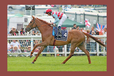 RED CADEAUX  Melbourne Cup runner up 3 times  modern Digital Photo Postcard