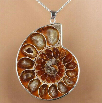 Madagascar Sea Nautilus Ammonite Shell Chain Gemstone Pendant For Necklace Hot A