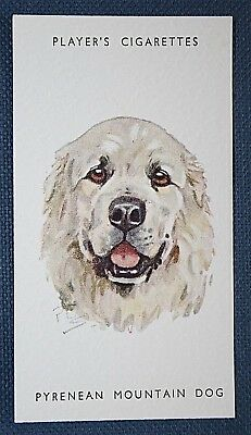 PYRENEAN MOUNTAIN DOG   Vintage Biegel Portrait Card