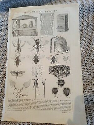 Bee and Beekeeping - Antique Book Page - c.1885 - German Text