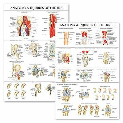2 Pack - Anatomy and Injuries of The Knee & Hip Poster Set - Anatomical Chart