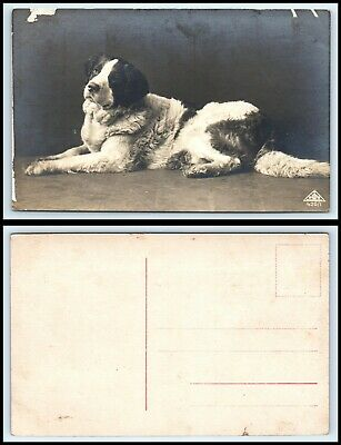 RPPC PHOTO Postcard - Dog Laying Down, Unknown Breed C10