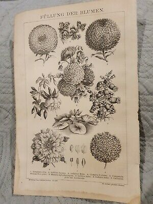Flowers - Antique Book Page - c.1885 - German Text